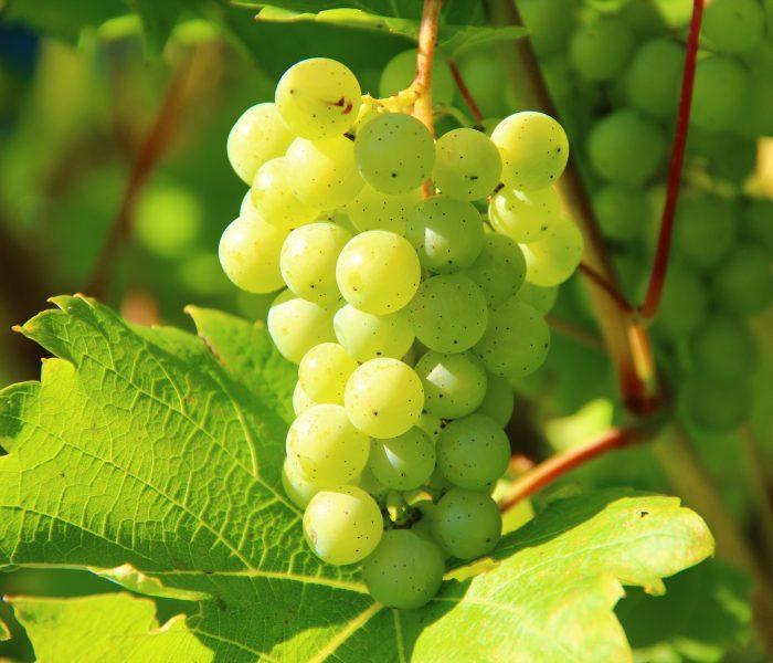 Recept voor witte Sangria